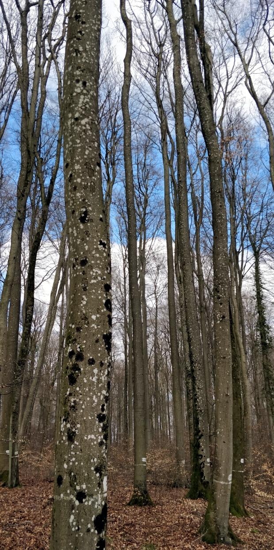 arbres cathédrale