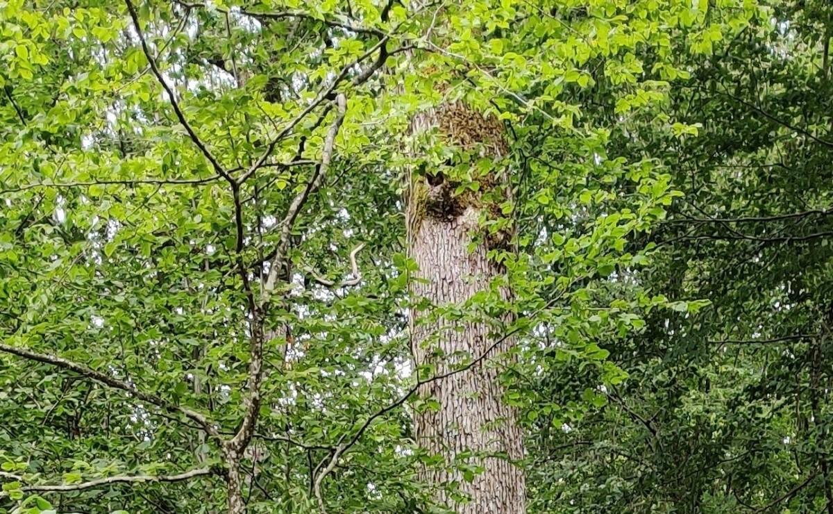 Petit peuple de la forêt